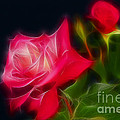 Gary Gingrich Galleries - Roses 6214-Fractal