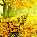 Row Of Red Benches In The Park by Jaroslaw Grudzinski