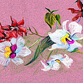 Mindy Newman - Saturday Orchids