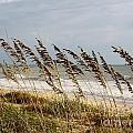 D Hackett - Sea Oats At The Beach