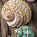 Sea Shells With Urchin  by Garry Gay