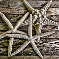 Colleen Kammerer - Sea Stars