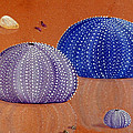 Karyn Robinson - Sea Urchins on the Beach