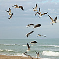 Cynthia Guinn - Seagulls On The Beach