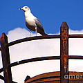 Joy Hardee - Sentinel Sea Gull