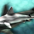 Barbara Chichester - Shark Art