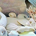 Danielle  Parent - Shells In Pastels