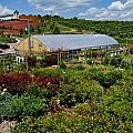 Shrubbery At A Greenhouse by Amy Cicconi