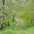 Alan L Graham - Spring Blossom Road