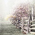 Spring Landscape With Fence by Elena Elisseeva