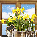 Spring Window by Amanda Elwell