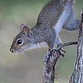 Deborah Benoit - Squirrel Pose
