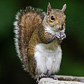 Dawna  Moore Photography - Squirrel Smile...