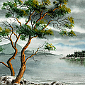 Frank Townsley - Stately arbutus