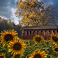Debra and Dave Vanderlaan - Summer in Sunflowers