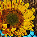 Phyllis Denton - Sunflower Burlap And...