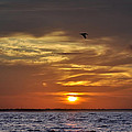 Bill Cannon - Sunrise on Tampa Bay