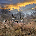 Christina Rollo - Sunset Geese