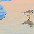 Bill  Wakeley - Sunset Piping Plover