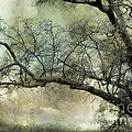 Surreal Gothic Dreamy Trees Nature Landscape by Kathy Fornal