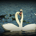 Laurie Perry - Swan Love 2