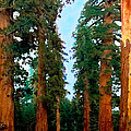 Bob and Nadine Johnston - Tall Trees in Yosemite...