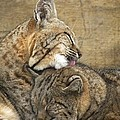 Tender Loving Care by Teresa Schomig