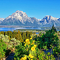 Greg Norrell - Teton Spring from Signal...