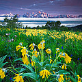 Teton Spring Wildflowers by Jerry Patterson