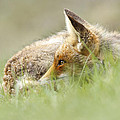 Roeselien Raimond - The Catcher in the Grass...