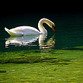 Judy Wanamaker - The Glowing Swan