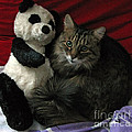Ausra Paulauskaite - The King Kitty and Panda...