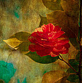 Loriental Photography - The Lady of the Camellias