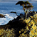 Bob and Nadine Johnston - The Lone Cypress Carmel...