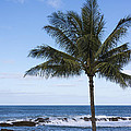 Brian Harig - The Perfect Palm Tree -...