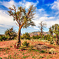 Bob Johnston - The Tree Sedona Secret...