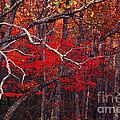 The Woods Aflame In Red by Paul W Faust -  Impressions of Light