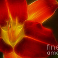 Gary Gingrich Galleries - Tiger Lily 6099-Fractal