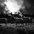 Tomales Bay Harem Under The Midnight Moon - 7d21241 - Black And White by Wingsdomain Art and Photography