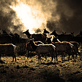 Tomales Bay Harem Under The Midnight Moon - 7d21241 - Sepia by Wingsdomain Art and Photography