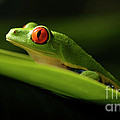 Bob Christopher - Tree Frog 7