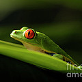 Bob Christopher - Tree Frog 8