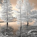 Jane Linders - Tree Reflections