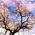 Barbara Chichester - Tree Top Pastel Sky