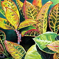 Prashant Shah - Tropical Colorful Croton...