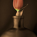 Linda Suffion - Tulip in a Bottle in...
