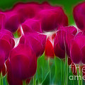 Gary Gingrich Galleries - Tulips-6842-Fractal