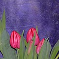 Sonali Gangane - Tulips from Persia