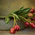 Robin-lee Vieira - Tulips