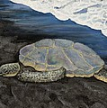 Darice Machel McGuire - Turtle on Black Sand